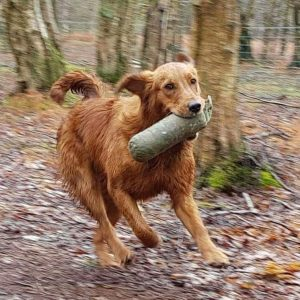 Gundog Training at Ravenigham